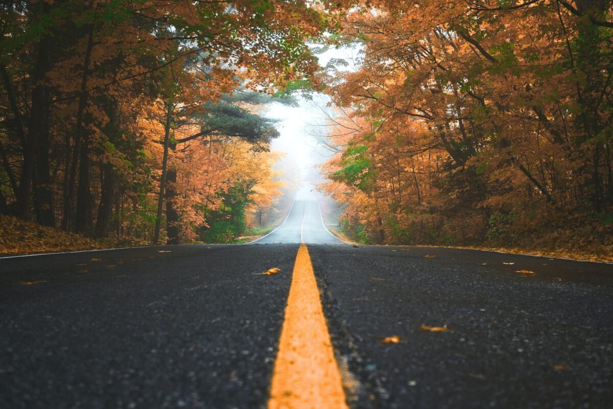 A road with trees hanging over it and fog ahead. Used to portray the customer's journey.